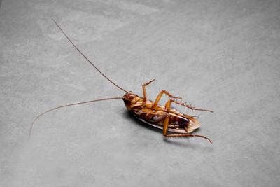 Pest Control Company in Jupiter, FL