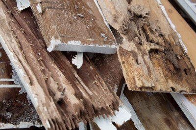 Signs of Termites in Your Home - Jupiter FL