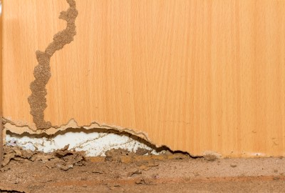Signs of Termite Damage - Jupiter FL